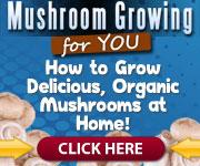 Mushroom Growing At Home